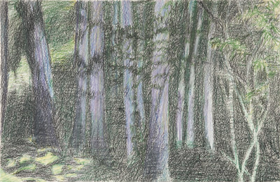 Sketch, Forest, Trees Sketch, Chalk, Oil Painting